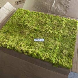 Benetti Stone Philosophy Moss Wall Tile 60cm x 80cm